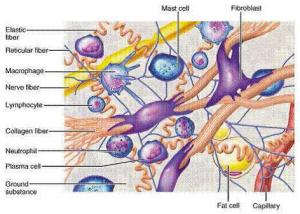diagram collagen