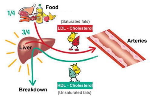 kolesterol-LDL-dan-HDL